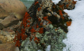000-999-Bright orange and green lichen on Yellowstone River