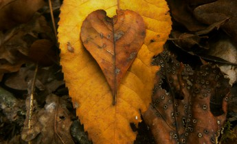 001-0000-Heart of Leaves